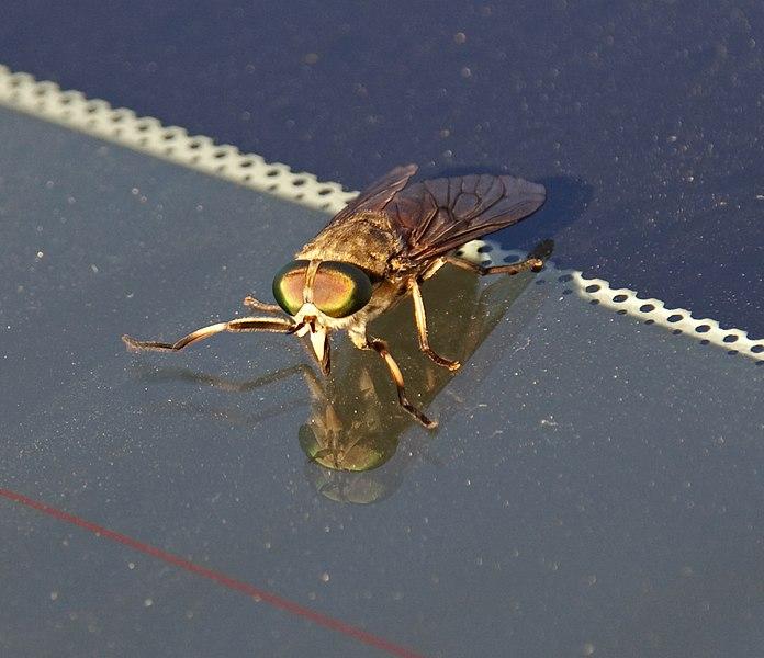 Strange Fly 2
