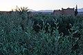Sunset (4989122793).jpg