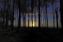 Sunset Gespensterwald Nienhagen.jpg
