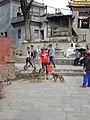 Swayambhunath (21565524065).jpg