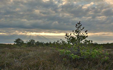 Tõlinõmme bog, Vääna Landscape reserve.