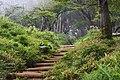 Tanzawa's trail (49441922548).jpg