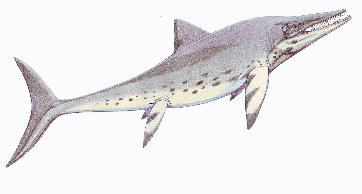 Temnodontosaurus - Wikispecies  Temnodontosauru...