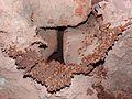 Termites Building.jpg