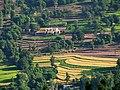 Terrace Farming (2877646816).jpg