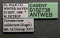 Tetramorium caldarium casent0102738 label 1.jpg