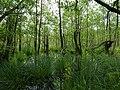 Teufelsbruch swamp next to crossing path in summer.jpg