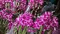 Thailand Bangkok Pak Khlong Talat - flower market ovedc 08.jpg