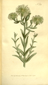 The Botanical Magazine, Plate 326 (Volume 10, 1796).png