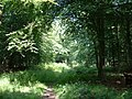 The Dover Woodland - geograph.org.uk - 21800.jpg