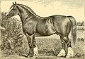 The breeds of live stock, and the principles of heredity (1887) (14781150215).jpg