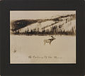 The calling of the moose (HS85-10-22630).jpg