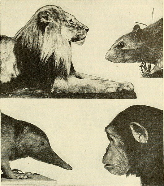 File:The chordates (1950) (20611663185).jpg