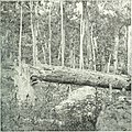 The photographic history of the Civil War - thousands of scenes photographed 1861-65, with text by many special authorities (1911) (14759666441).jpg