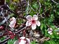 Tinyflowers3.jpg