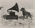 To entertain the men, Captain Robert Scott took a gramophone on his South Pole Expedition. Chris, one of his dogs, was apparently also a fan.jpg