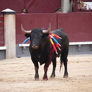 English: Bull with banderillas, Plaza de Toros...