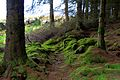 Torr Righ and King's Cave trail, Arran 02.jpg
