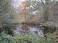 Totteridge Common pond.JPG
