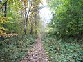 Track in Peasewell Wood - geograph.org.uk - 1553263.jpg