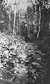Trail on south side of Skeena River (65410).jpg