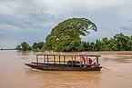 Transport of buffalos on the Mekong.jpg
