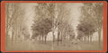 Tree lined avenue, by Ackerman Bros..png