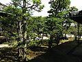 Trees near Ninomaru-Goden Hall of Nijo Castle.JPG