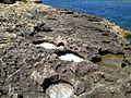 Triq Dragunara, San Ġiljan, Malta - panoramio (10).jpg