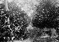 Tropenmuseum Royal Tropical Institute Objectnumber 60001028 In de plantage La Ressource staan jon.jpg
