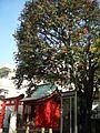 Tsubaki Inari Shrine (椿稲荷神社) - panoramio.jpg