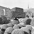 Tuin, vormgesnoeide taxusbomen - Sint Agatha - 20340960 - RCE.jpg