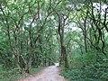 Turda gorges (3959701283).jpg