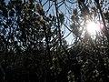 U Černého jezírka - panoramio.jpg