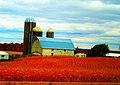 Udder Family Farm - panoramio.jpg