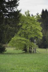 Ulrichstein Feldkruecken Am Melgershain NR 162171 Det c.png