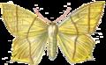 Urapteryx Sambucaria.PNG