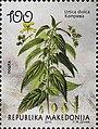Urtica dioica. Stamp of Macedonia.jpg