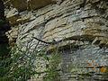 Valbelle (04) végétation rupestre.jpg