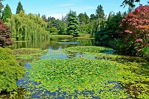 VanDusen Botanical Garden - Image: Van Dusen Botanical Garden 3