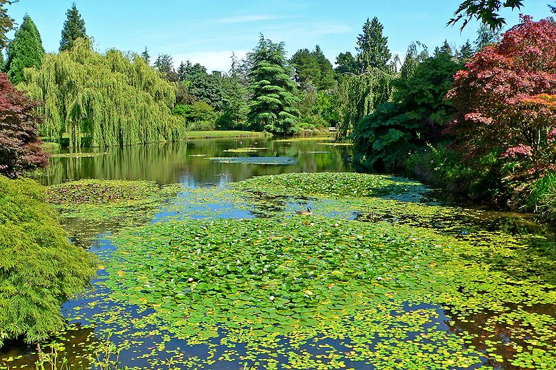 Arquivo: VanDusen Jardim Botânico 3.jpg