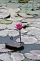 Varanasi,up.jpg