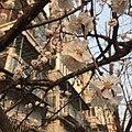 View of Beijing 2 20170318.jpg