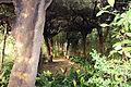 Villa la quiete, giardino, 'stanza' verde 01.JPG