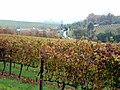 Vines @ Stellenbosch, South Africa.jpg