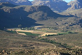 Vineyards in the Cederberg - South Africa.JPG
