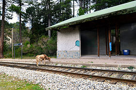 280px Vivario gare de Savaggio Camping Doesnt Have To Be Rough. Read This Advice!