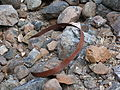 Waldo Mine 5 - Cave Junction Oregon.jpg
