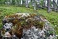 Walking trail, Inari, Finland (14) (36683920555).jpg