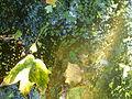Water and Leaves.JPG